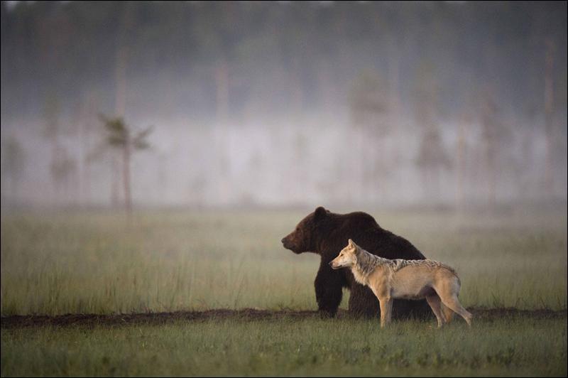 Ces deux animaux sont présents sur mon territoire !
