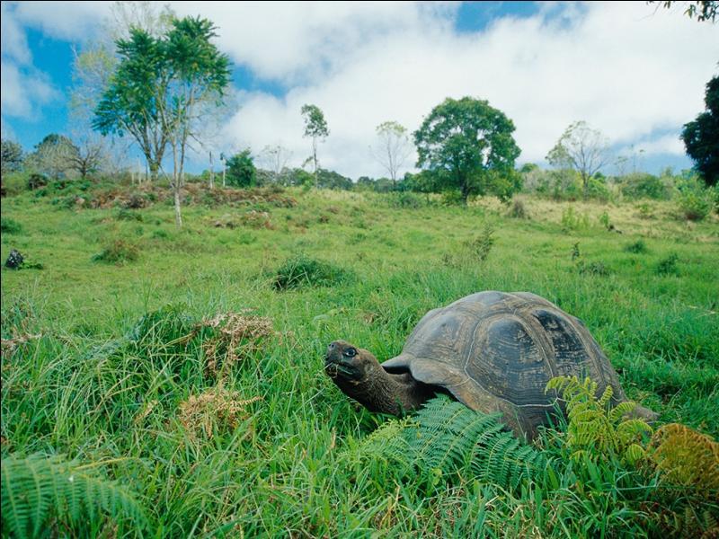 Je suis un archipel composé de neuf îles, certains des animaux qui me parcourent peuvent vivre très vieux !