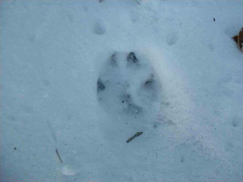 Sauriez-vous reconnaître ces empreintes d'animaux ?