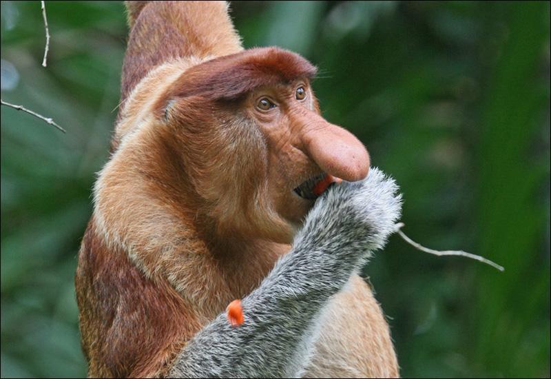 Quizz quelques animaux moins connus quiz animaux photos humour - Comment s appelle l arbre du kaki ...