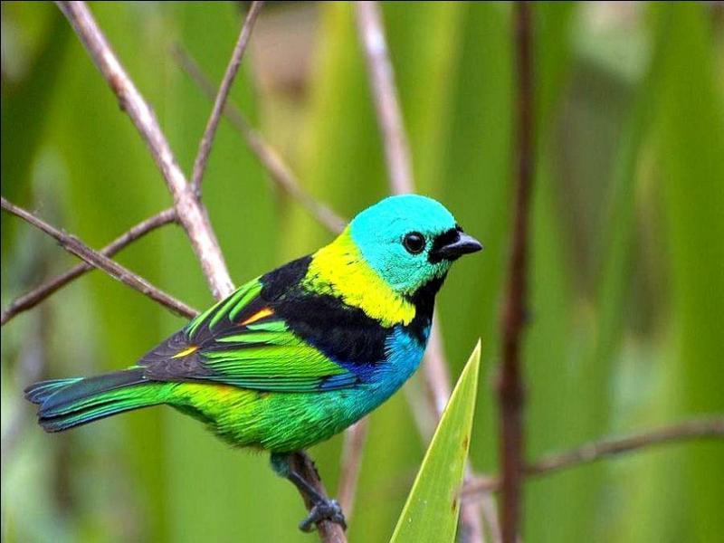 Il est joli ce petit oiseau non ? Et en plus il est de toutes les couleurs, ce qui devrait vous aider à trouver le nom de l'interprète !