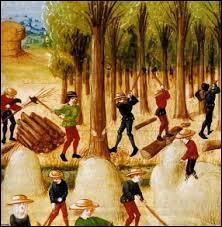 Le Moyen Âge est l'époque des grands défrichements qui ont permis d'augmenter considérablement la surface des terres cultivables. Laquelle de ces activités n'a pas de rapport avec le défrichement ?