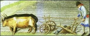 De nouveaux outils font leur apparition. Ils permettent de faciliter le travail des paysans comme la charrue avec un soc de fer qui permet de retourner profondément la terre et de l'aérer. Comment s'appelait l'ancêtre de la charrue faite de bois qui, jusque-là, ne permettait que de creuser des sillons en surface ?