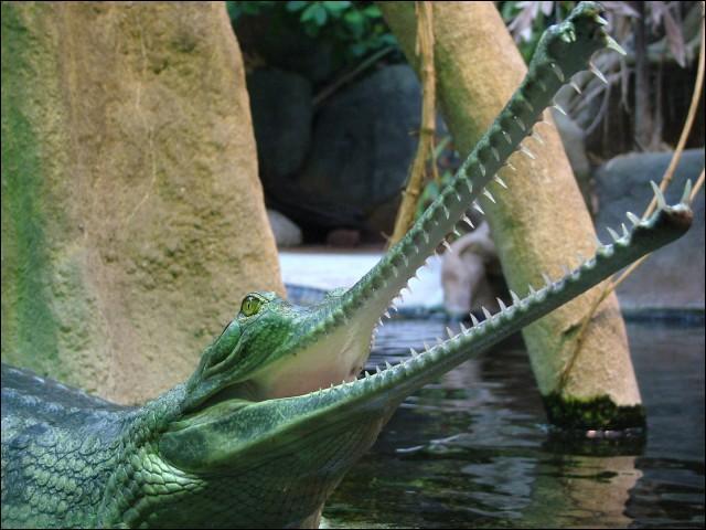 Je suis sûr que tu connais bien cet animal, il vit en Asie, quel est son nom ?