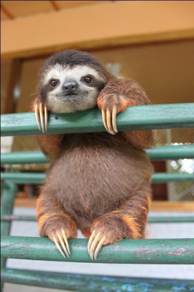 Retrouve le nom de ce bébé animal, et surtout fais comme lui, prends ton temps !