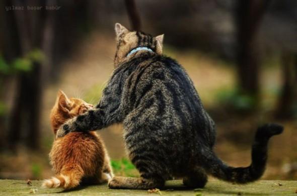 Quelques animaux que tu connais 2