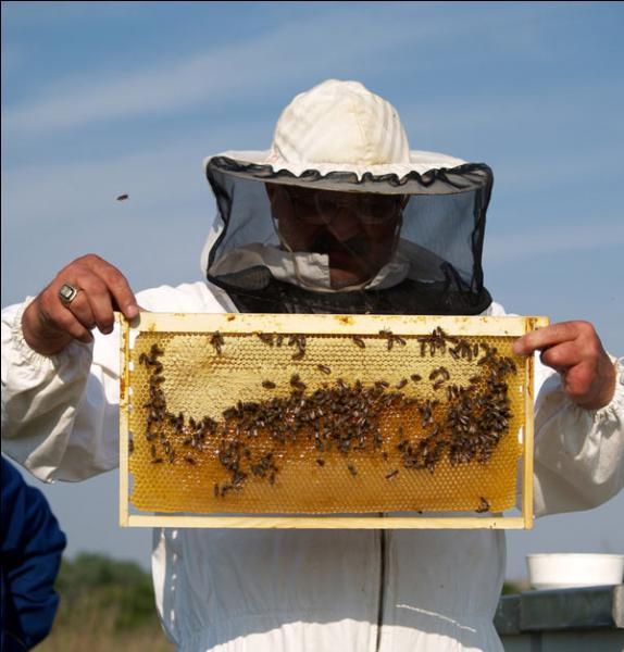 Cette abeille tueuse métissée est en train de coloniser les Amériques, mais de quelle origine est-elle ?