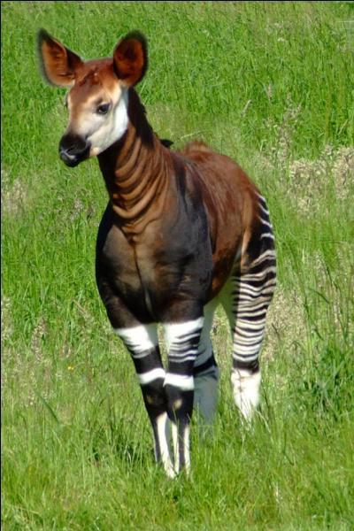 Peut-être as-tu déjà vu cet animal africain, mais connais-tu son nom ?