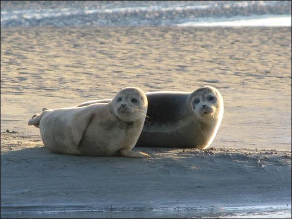 La baie de Somme, haut lieu ornithologique également réputé par la présence de phoques, est située dans la région :