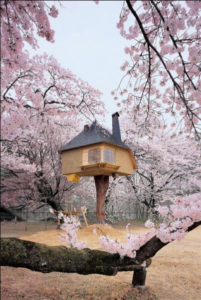 Dans ce pays, c'est au moment du soleil levant que les cerisiers sont le plus magnifiques !