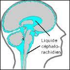 Le cerveau baigne dans un liquide qui le protège des chocs violents . Comment s'appelle-t-il ?