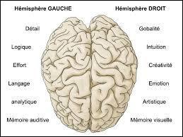 De combien d'hémisphères le cerveau est-il composé ?
