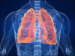 Le poumon est un organe qui fait partie du système respiratoire. Cette poche contient l'air que nous respirons. L'oxygène est transporté par le sang jusqu'aux organes. Mais combien de litres d'air, les poumons inhalent-ils chaque jour en moyenne ?