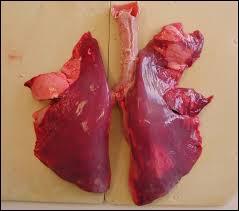 Par quel conduit l'air que nous respirons arrive-t-il jusqu'aux poumons ?
