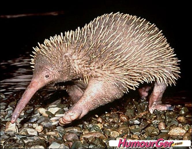 Mais qui peuvent bien être les parents de cette créature étonnante ?