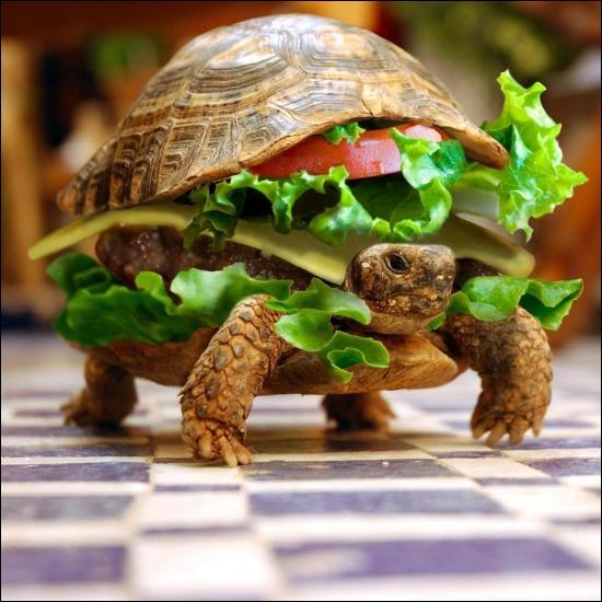 C'est une tortue très particulière, on la trouve en général autour des self-services où elle se nourrit de salades et de tomates, elle adore ça, elle est facile à apprivoiser, surtout si vous vous habillez en clown !