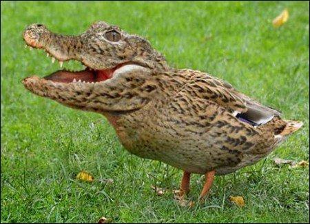 On vient de découvrir cet animal bizarre dans l'imagination d'un auteur de Quiz.biz, vous connaissez sûrement les parents de cette créature !