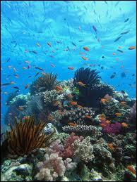 Géographie - Retrouvez l'affirmation erronée concernant la Grande Barrière de corail :