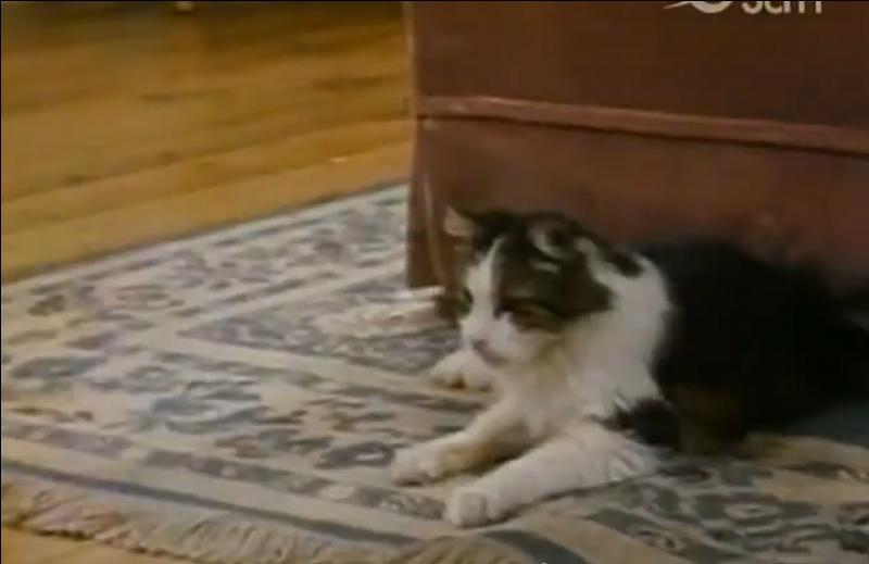 Dans quel générique voit-on un chat qui ne tarde pas à s'enfuir ?