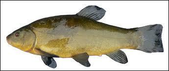 J'aime le fond, je suis un poisson d'eau douce assez grand , je suis :