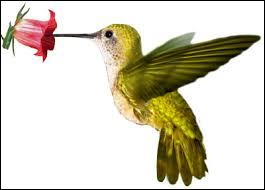 Quel est le vrai nom de l'oiseau-mouche ?