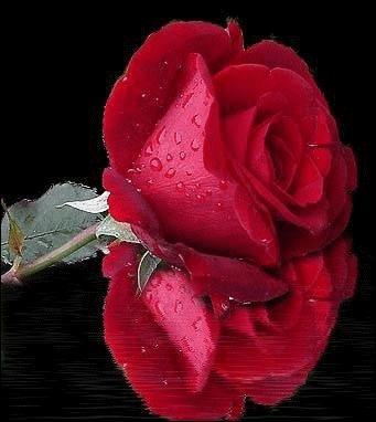 """De quel genre est le livre de René Barjavel """"Une rose au Paradis"""" ?"""