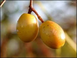 La pomme Cythère et la pomme cannelle désignent-elles le même fruit ?