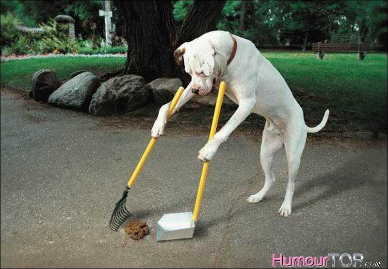 Vous marchez sur une crotte de chien. Pas de panique ! Cela vous portera chance si ...