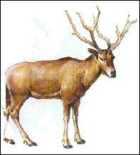 """""""Le cerf du père David"""" est une espèce en danger :"""