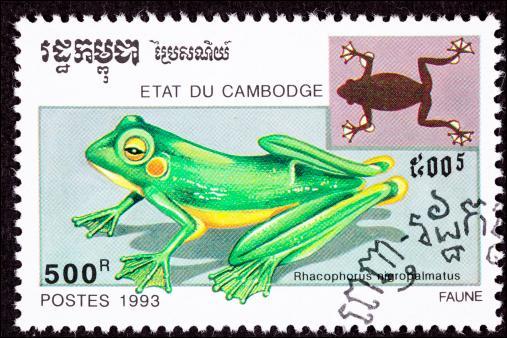 """""""La grenouille volante d'Abah"""" est une espèce en danger :"""