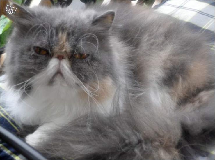 Comment s'appelle le chat de Prim ? (Eh oui, pour ceux et celles qui n'ont vu que le film)