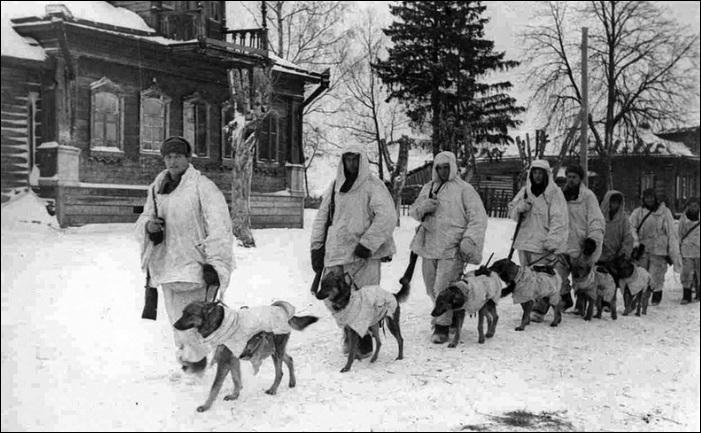 """Pendant la 2 e Guerre mondiale, les japonais n'ont pas été les seuls à employer des techniques kamikazes. Les soviétiques ont dressé des chiens, chargés d'explosifs, à aller sous les véhicules blindés allemands. Ils explosaient alors, le véhicule était détruit et le chien sacrifié. On les appelait les chiens """"chiens-bombes ou chiens-mines"""". Un tel entraînement perdura jusque dans les années 1990."""