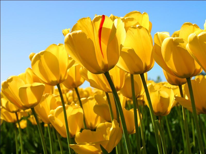 "Qui chante ""A fleur de toi"" ?"