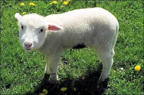 La maîtresse décole ou revenons à nos moutons - Nu