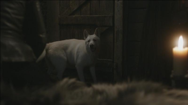 A qui appartient ce loup, il s'appelle Fantôme ?