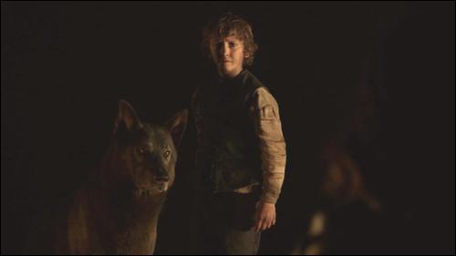 Comment se nomme le loup de Rickon ?