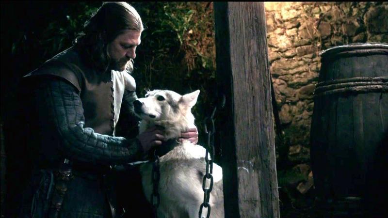 Que va faire Eddard au loup ?