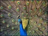 Quel était le nom de l'homme aux cent yeux qui furent donnés plus tard au paon d'Héra ?