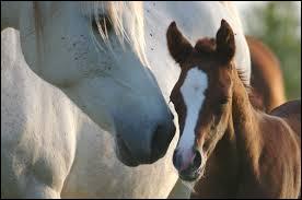 Qu'est-ce qu'un centaure ?