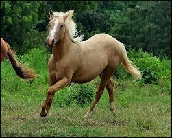 Les chevaux, une passion