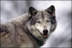 Si vous marchez à pas de loup, c'est que vous marchez ...