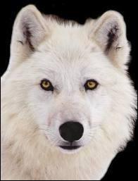 Si vous êtes connus comme le loup blanc, c'est que vous ...