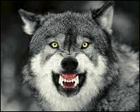 Que signifie l'expression :  Quand on parle du loup on en voit la queue  ?
