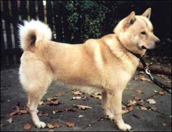 Par lequel de ces trois noms ne peut-on pas appeler ce chien?