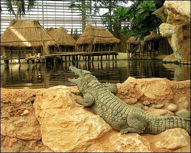 Dans quel département dont une des villes est réputée pour ses olives, irez-vous visiter la ferme aux crocodiles, dans la petite ville de Pierrelatte ?