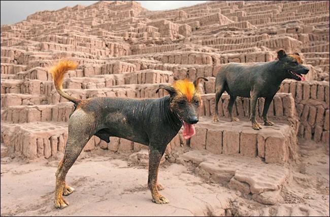Un pays : Chiens nus, Mayas, Cortes ?