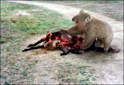 Là, tu peux voir un ours qui mange sa proie !