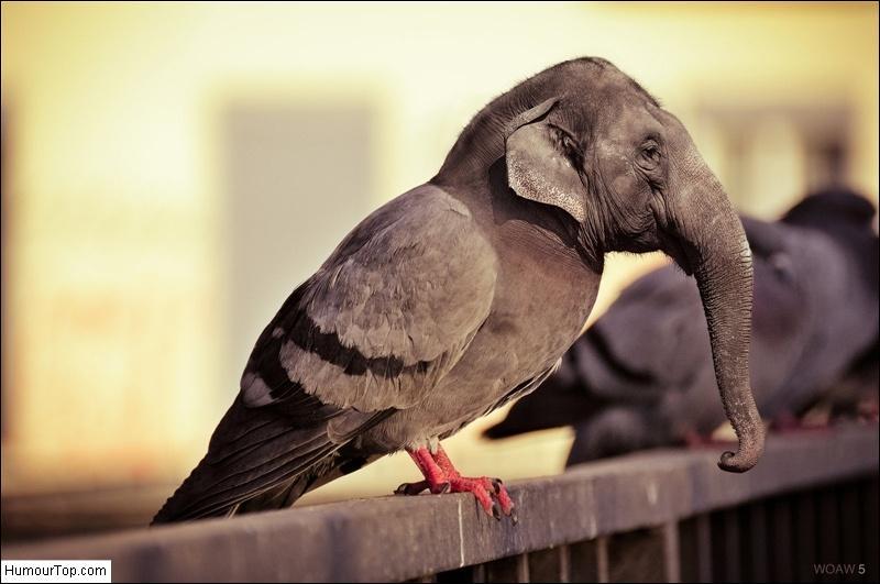 Tu peux constater que l'on voit un corps de pigeon surmonté d'une tête d'éléphant d'Afrique !
