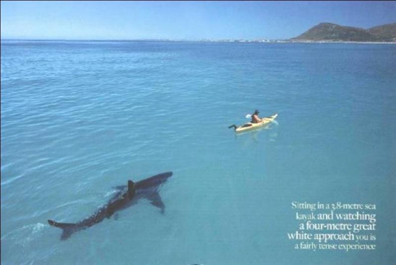 Sur cette photo, on voit un énorme requin !