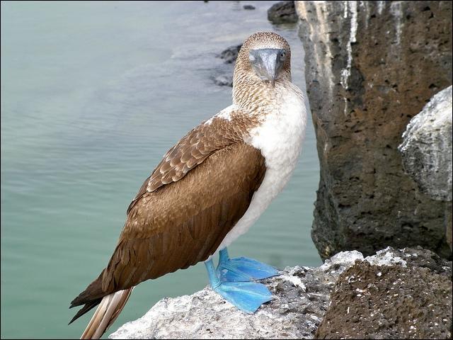 Regardez bien cet oiseau et essayez d'y voir clair !